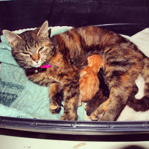 Ingrids kattungar
